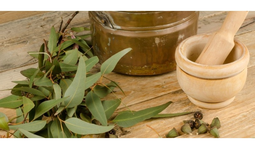 Eucalyptus Essential Oil: 5 Benefits You Should Know