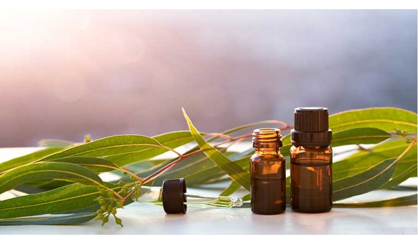 3 Benefits of Eucalyptus Essential Oil that You Must Know This Winter