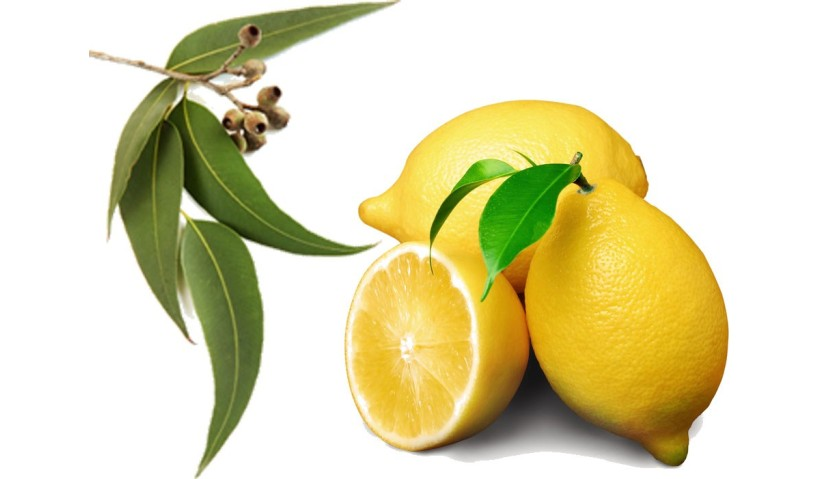 Eucalyptus Lemon Essential Oil - A Therapeutic and Healing Formula for Respiratory System