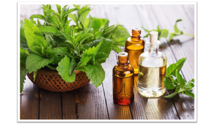 Natural Bee Repellent Essential Oils