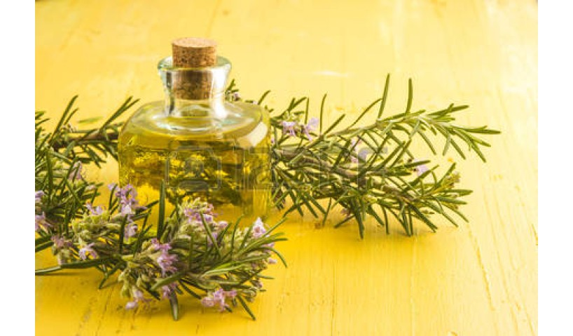 Benefits of Rosemary Essential Oil for Mental Health