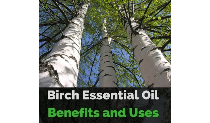 Birch Tar Essential Oil - One Solution To All Your Health Worries