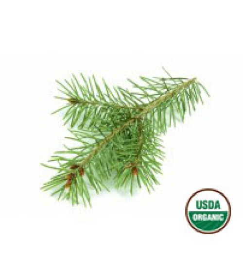 White Spruce Essential Oil, ORGANIC
