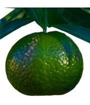 Green Mandarin Essential Oil