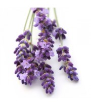 Lavender Dutch Essential Oil