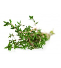 Thyme Essential Oil Serpyllum L Europe