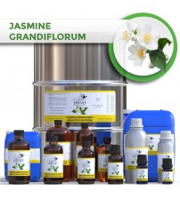 Jasmine Grandiflorum Absolute 3% in Jojoba