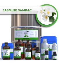 Jasmine Sambac Absolute 3% in Jojoba