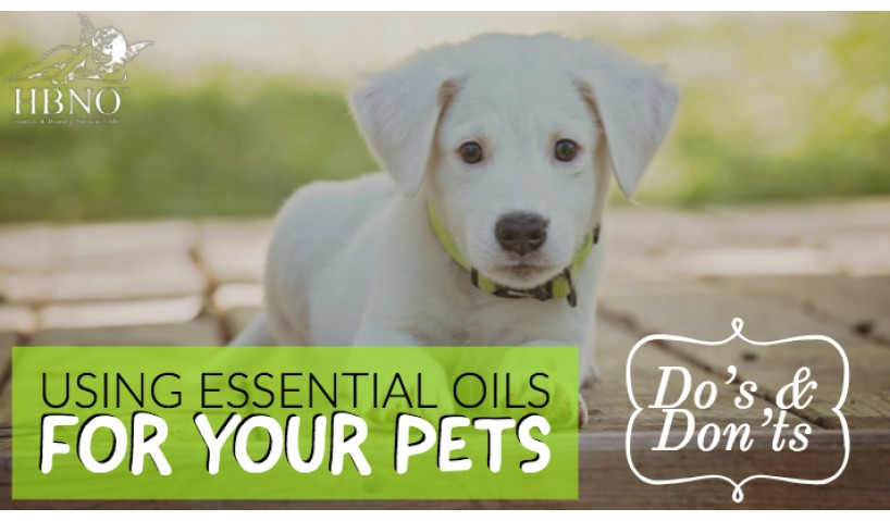 Using Essential Oils for your Pets: Do's and Don'ts