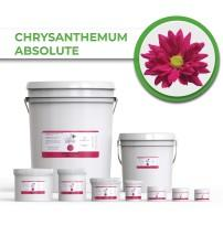 Chrysanthemum Absolute