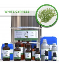 White Cypress Essential Oil